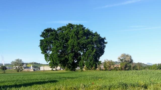 """Il """"mio"""" albero - 7 maggio 2019"""