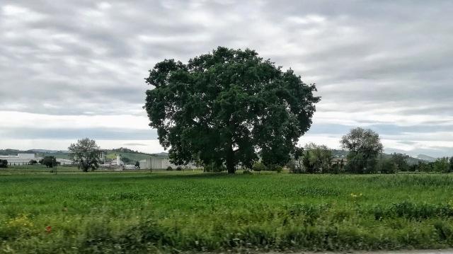 """Il """"mio"""" albero - 8 maggio 2019"""