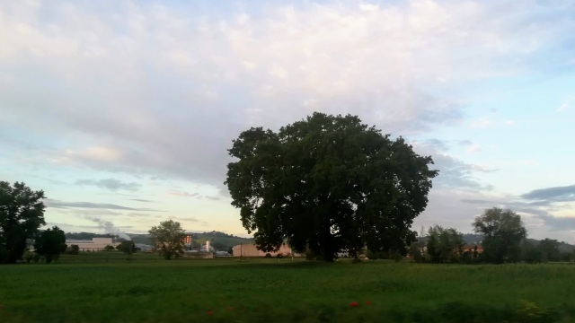 """Il """"mio"""" albero - 10 maggio 2019"""