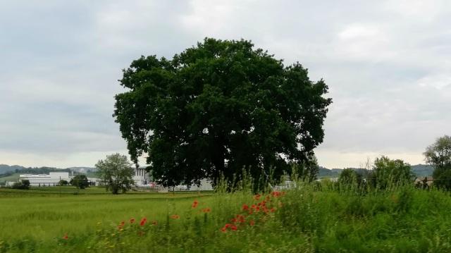 """Il """"mio"""" albero - 22 maggio 2019"""