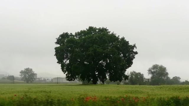 """Il """"mio"""" albero - 29 maggio 2019"""
