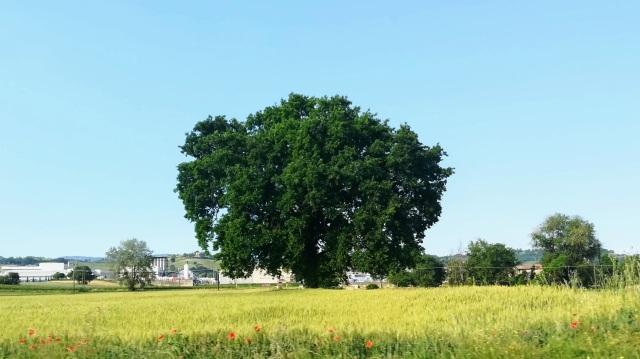"""Il """"mio"""" albero - 5 giugno 2019"""