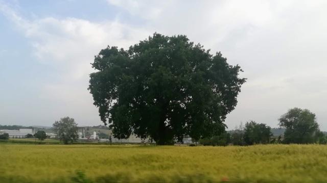 """Il """"mio"""" albero - 9 giugno 2019"""
