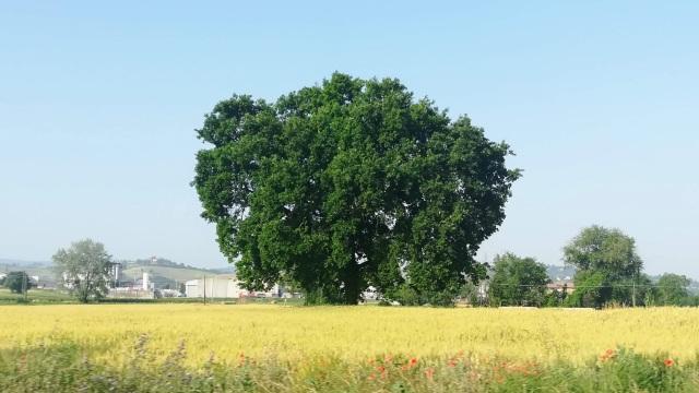 """Il """"mio"""" albero - 12 giugno 2019"""