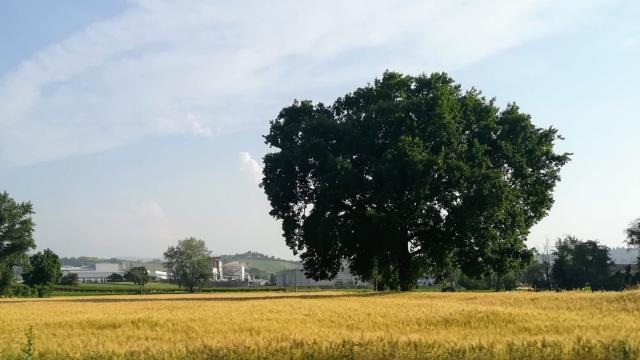"""Il """"mio"""" albero - 15 giugno 2019"""