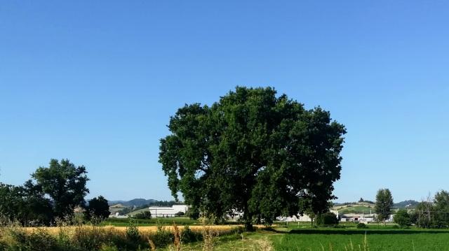 """Il """"mio"""" albero - 19 giugno 2019"""