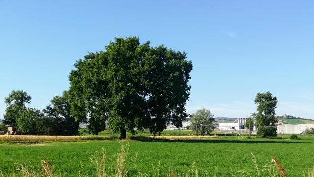 """Il """"mio"""" albero - 20 giugno 2019"""