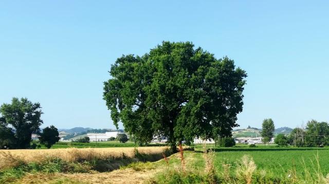 """Il """"mio"""" albero - 26 giugno 2019"""