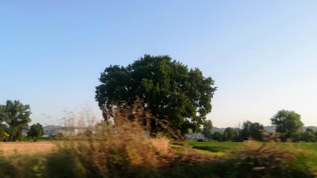 """Il """"mio"""" albero - 27 giugno 2019"""
