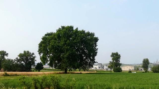 """Il """"mio"""" albero - 28 giugno 2019"""
