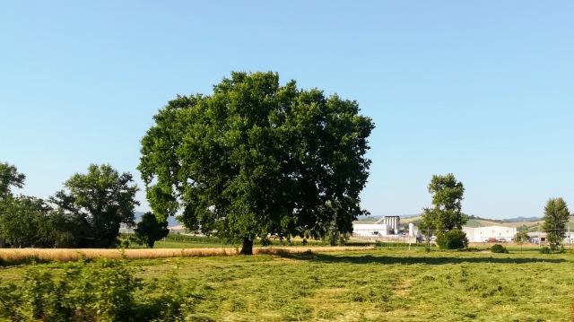 """Il """"mio"""" albero - 5 luglio 2019"""