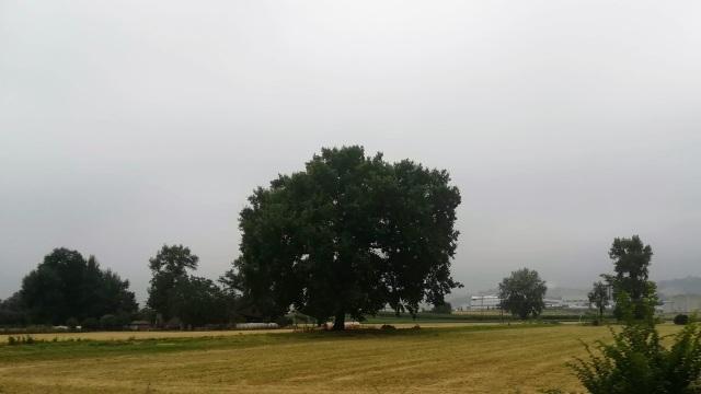 """Il """"mio"""" albero - 9 luglio 2019"""