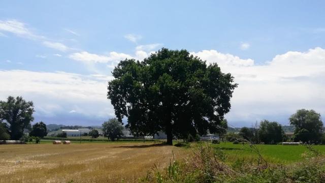 """Il """"mio"""" albero - 14 luglio 2019"""