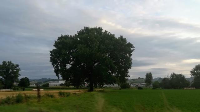 """Il """"mio"""" albero - 15 luglio 2019"""