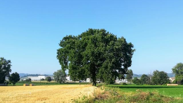 """Il """"mio"""" albero - 16 luglio 2019"""