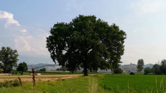 """Il """"mio"""" albero - 18 luglio 2019"""