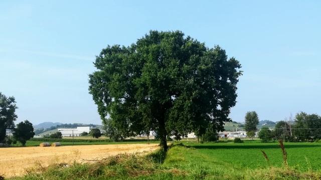 """Il """"mio"""" albero - 19 luglio 2019"""