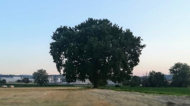 """Il """"mio"""" albero - 24 luglio 2019"""