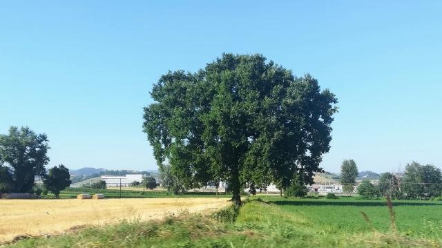 """Il """"mio"""" albero - 25 luglio 2019"""