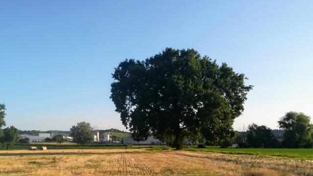 """Il """"mio"""" albero - 29 luglio 2019"""