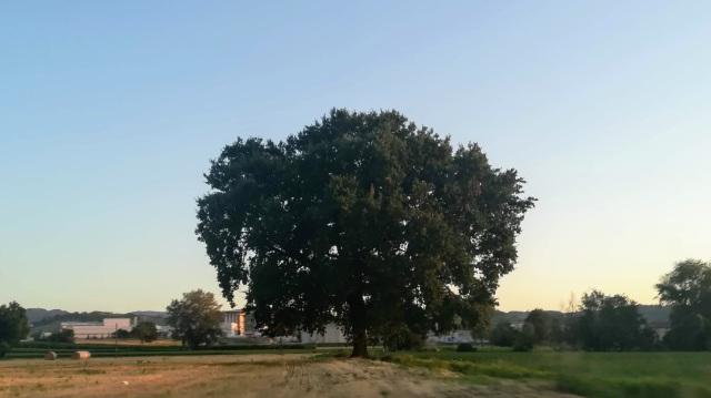 """Il """"mio"""" albero - 30 luglio 2019"""