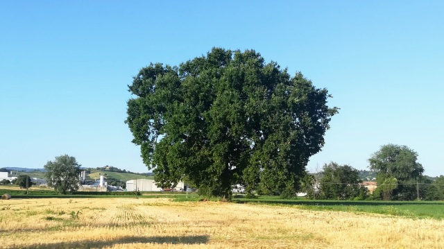 """Il """"mio"""" albero - 31 luglio 2019"""