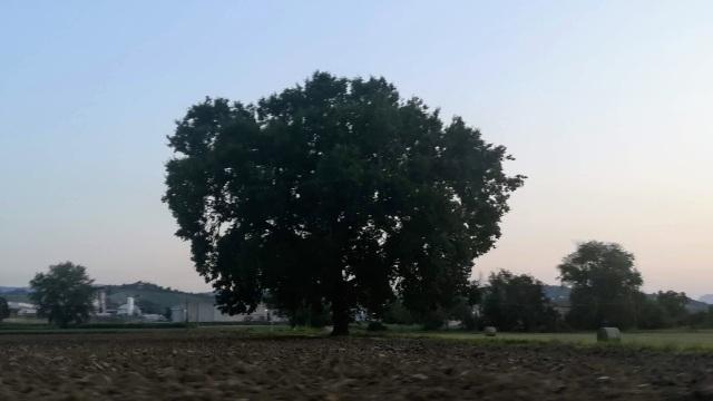 """Il """"mio"""" albero - 6 agosto 2019"""