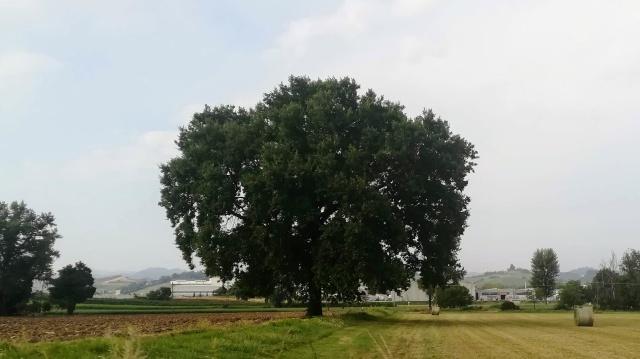 """Il """"mio"""" albero - 7 agosto 2019"""