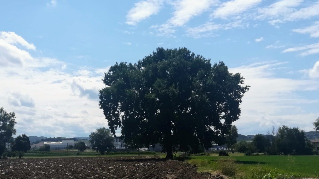 """Il """"mio"""" albero - 15 agosto 2019"""