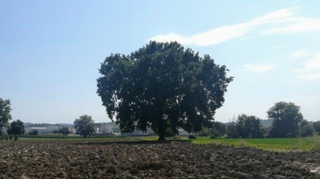 """Il """"mio"""" albero - 19 agosto 2019"""