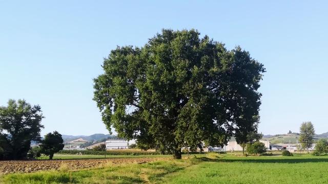 """Il """"mio"""" albero - 20 agosto 2019"""