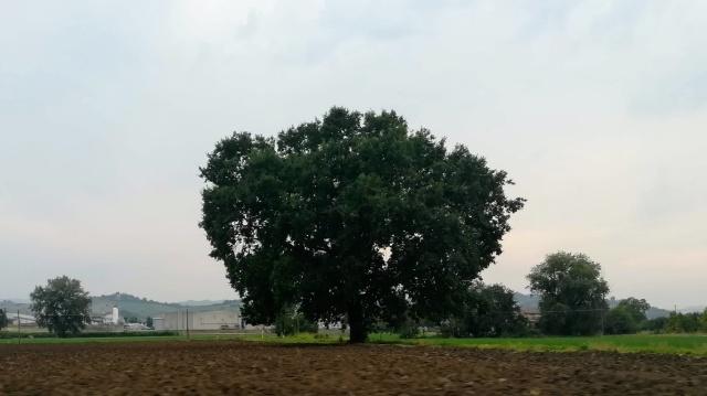 """Il """"mio"""" albero - 22 agosto 2019"""