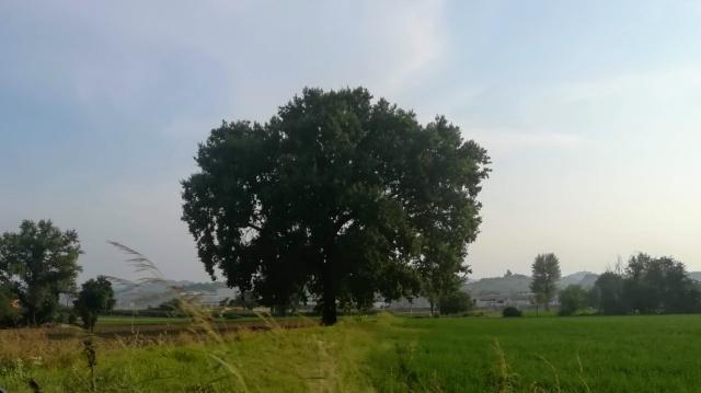 """Il """"mio"""" albero - 27 agosto 2019"""