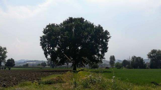 """Il """"mio"""" albero - 1 settembre 2019"""