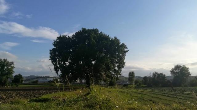 """Il """"mio"""" albero - 10 settembre 2019"""
