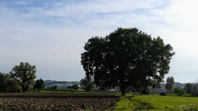 """Il """"mio"""" albero - 15 settembre 2019"""