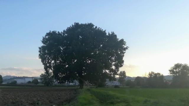 """Il """"mio"""" albero - 24 settembre 2019"""