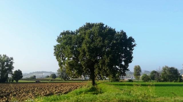 """Il """"mio"""" albero - 27 settembre 2019"""