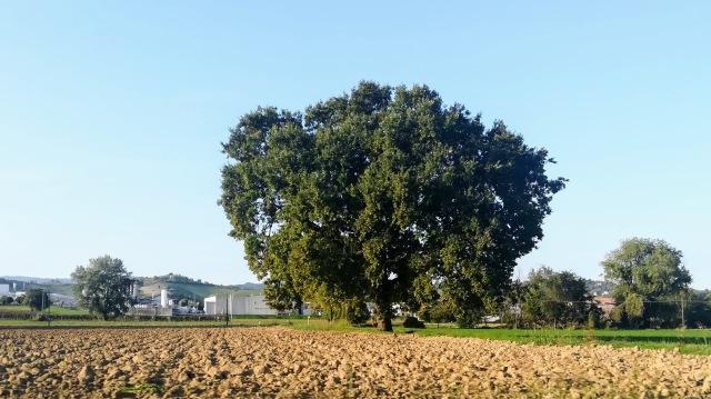 """Il """"mio"""" albero - 1 ottobre 2019"""