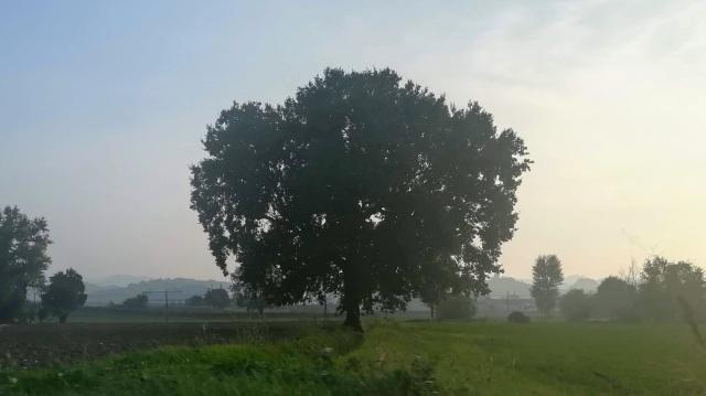 """Il """"mio"""" albero - 10 ottobre 2019"""