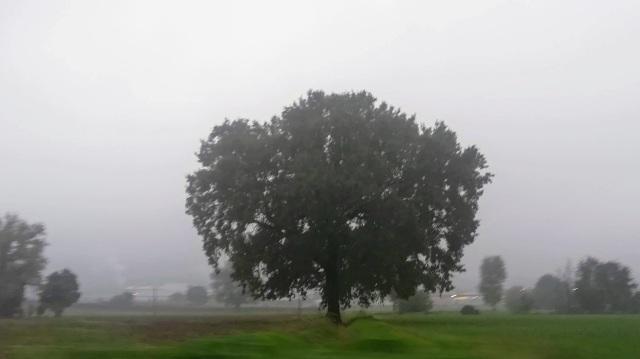 """Il """"mio"""" albero - 24 ottobre 2019"""