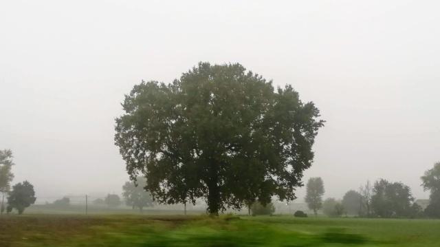 """Il """"mio"""" albero - 30 ottobre 2019"""