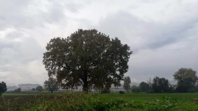 """Il """"mio"""" albero - 8 novembre 2019"""