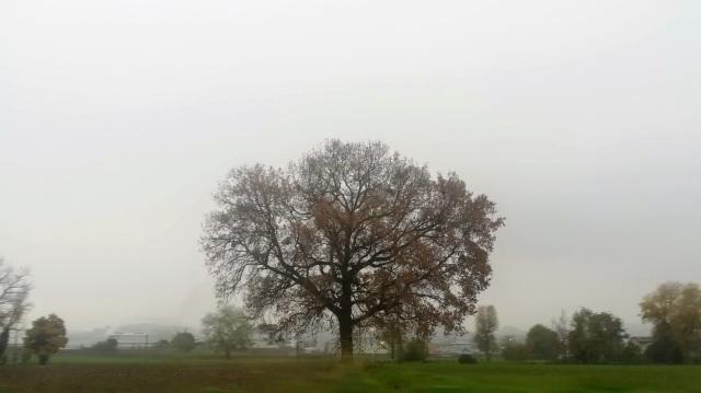 """Il """"mio"""" albero - 22 novembre 2019"""