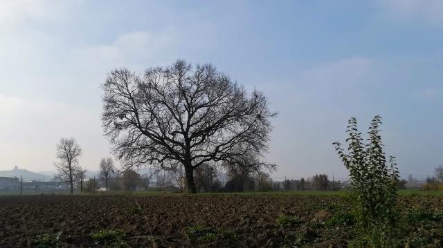 """Il """"mio"""" albero - 29 novembre 2019"""