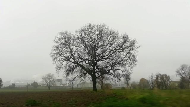 """Il """"mio"""" albero - 1 dicembre 2019"""